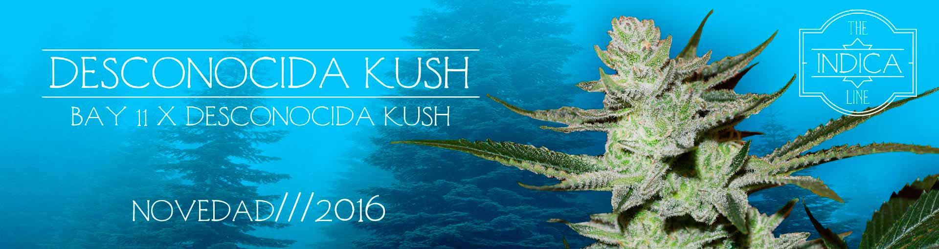 Desconocida Kush