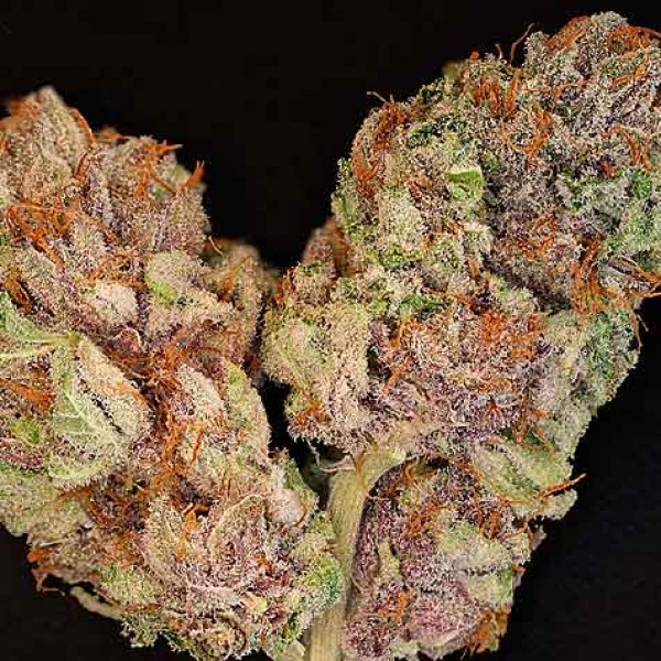 The OX  - 12 Seeds - Rare Dankness
