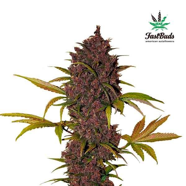 Lsd марихуана конопля ук рф