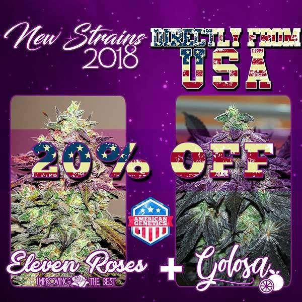NEW STRAINS PACK - GOLOSA + ELEVEN ROSES - феминизированные - семена