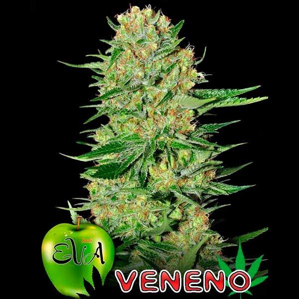 VENENO - Eva Seeds