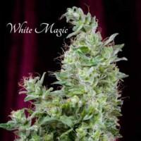 покупка  White Magic