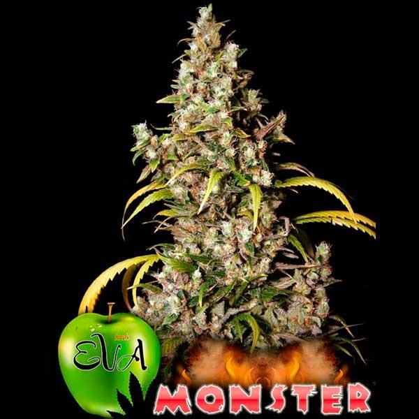 MONSTER - Eva Seeds