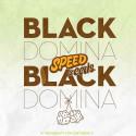 BLACK DOMINA X BLACK DOMINA