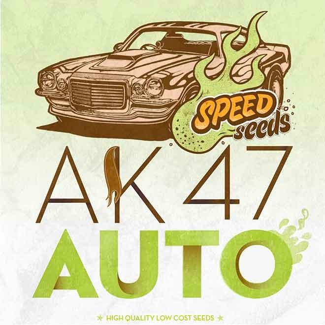 AK 47 AUTO (SPEED SEEDS) - Speed Seeds