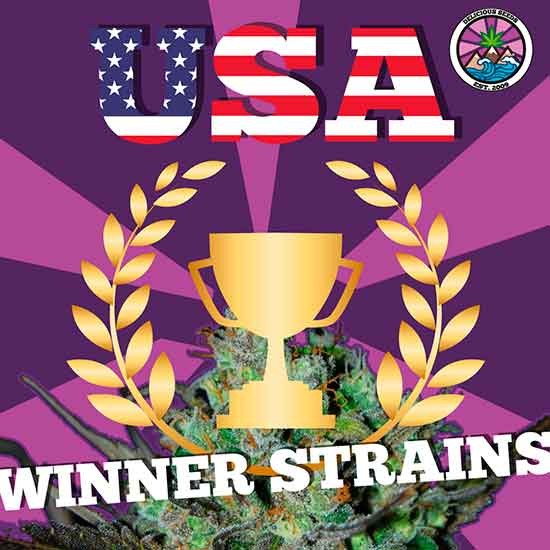 USA Winner Strains - GOURMET SAMMLUNG - Hanfsamen
