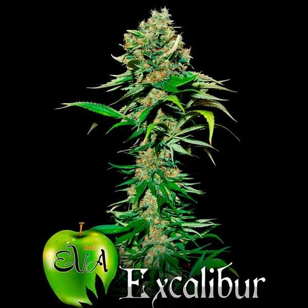 EXCALIBUR - Eva Seeds
