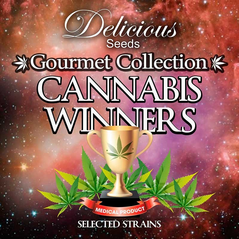 Gourmet Collection - Cannabis Winner Strains - GOURMET SAMMLUNG - Hanfsamen