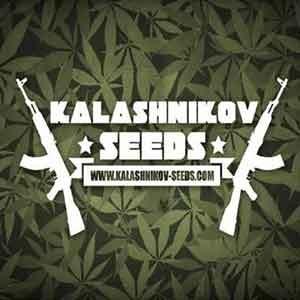 Moscow Blueberry Auto  - Kalashnikov