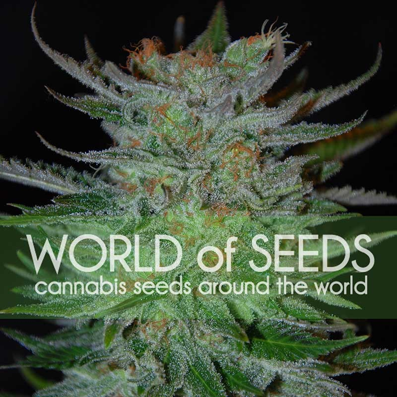 New York 47 - World of Seeds
