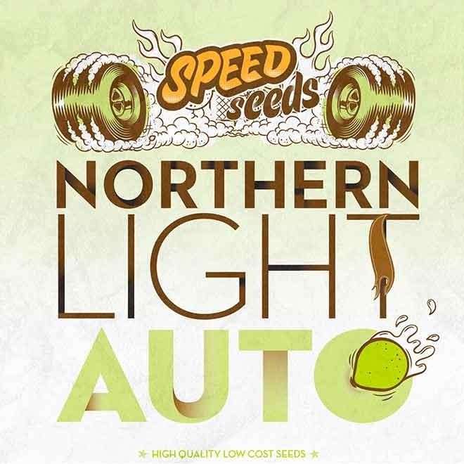 NORTHERN LIGHT AUTO - Speed Seeds