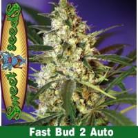 Kauf FAST BUD #2 AUTO