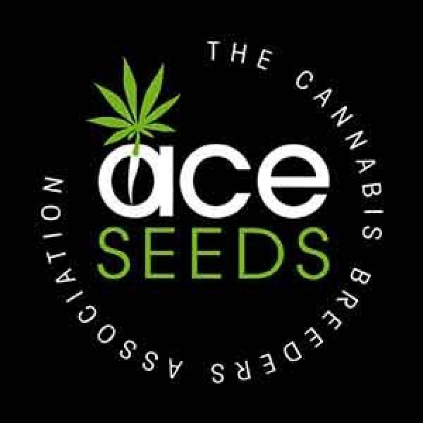 Green Haze Regular - 5 seeds - Ace Seeds