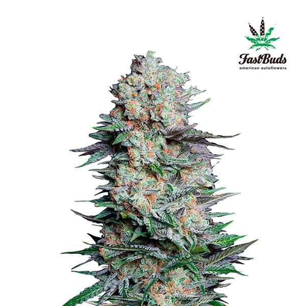 MEXICAN AIRLINES - FastBuds