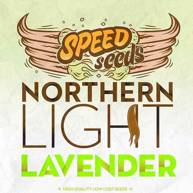 NORTHERN LIGHT X LAVENDER - Speed Seeds