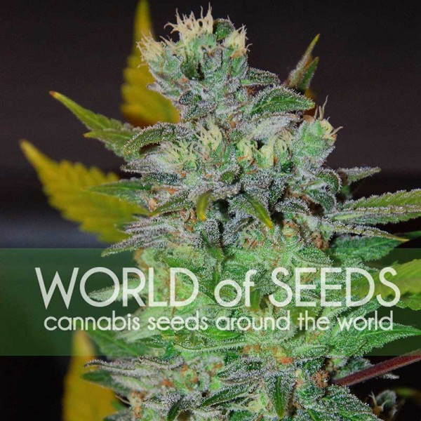 Space - World of Seeds