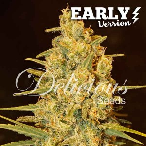Critical Sensi Star Early Version - EARLY VERSION - Seeds