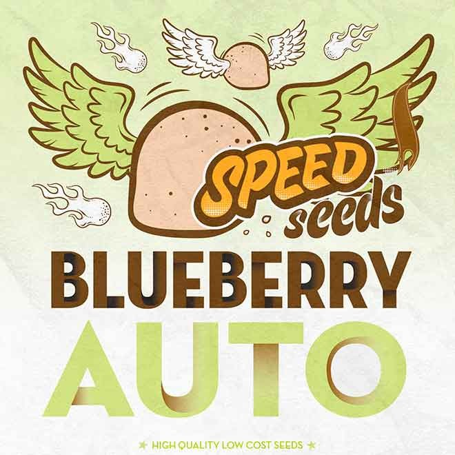 BLUEBERRY AUTO (SPEED SEEDS) - Speed Seeds