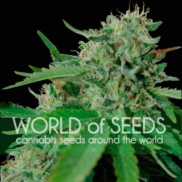 Brazil Amazonia - World of Seeds