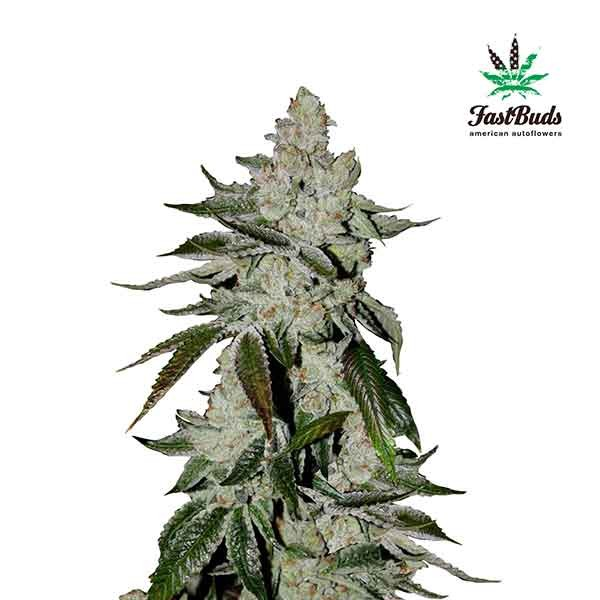 GIRL SCOUT COOKIES - FastBuds