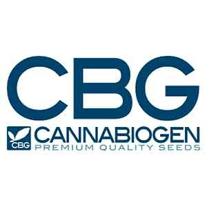 Mangobiche regular - 10 seeds - Cannabiogen