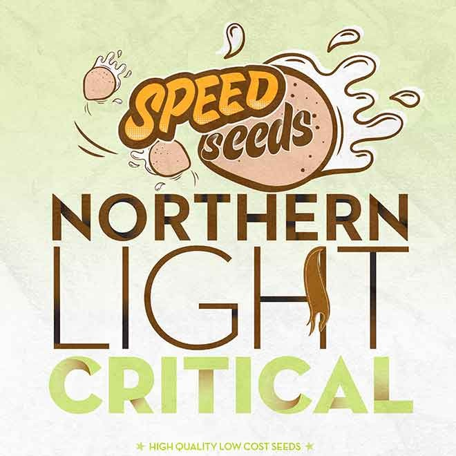 NORTHERN LIGHT X CRITICAL - Speed Seeds