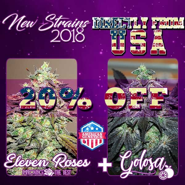 NEW STRAINS PACK INDICA - GOLOSA + ELEVEN ROSES - Feminized - Seeds