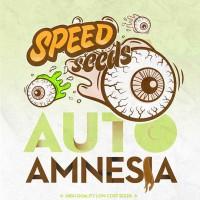 Purchase AMNESIA AUTO (SPEED SEEDS)