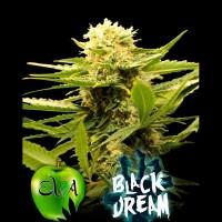 Purchase BLACK DREAM