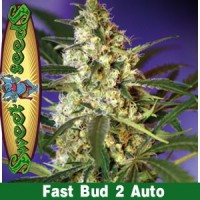 Purchase FAST BUD #2 AUTO
