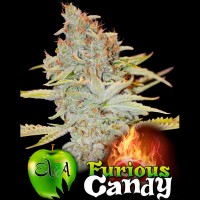 Purchase FURIOUS CANDY