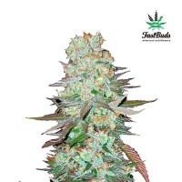 Purchase G14