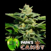 Purchase PAPA'S CANDY