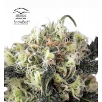 Purchase Snow Bud