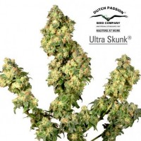 Purchase Ultra Skunk
