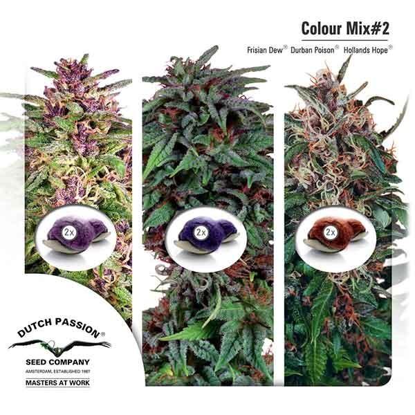 Colour Mix 2 -  -