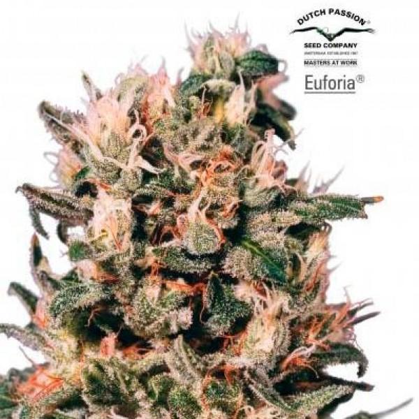 Euforia - Dutch Passion
