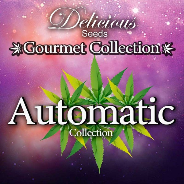 Gourmet Collection - Automatic Strains - Graines - COLLECTION GOURMET