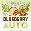 BLUEBERRY AUTO (SPEED SEEDS)