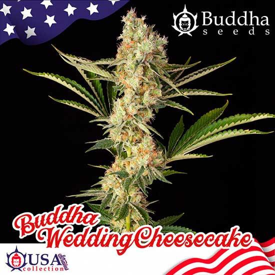 BUDDHA WEDDING CHEESECAKE - Buddha Seeds