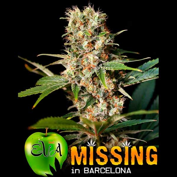 MISSING IN BARCELONA - Eva Seeds