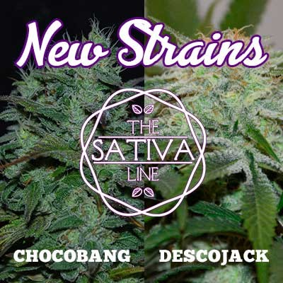 NEW STRAINS PACK SATIVA - CHOCOBANG + DESCOJACK - Féminisée - Graines