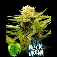 Achat BLACK DREAM
