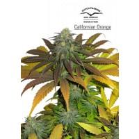 Achat Californian Orange
