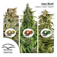 Achat Colour Mix 6 (AutoFem)