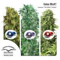 Achat Colour Mix 7 (AutoFem)