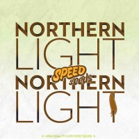 Achat NORTHERN LIGHT X NORTHERN LIGHT