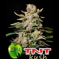 Achat TNT KUSH
