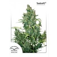 Achat Tundra #2