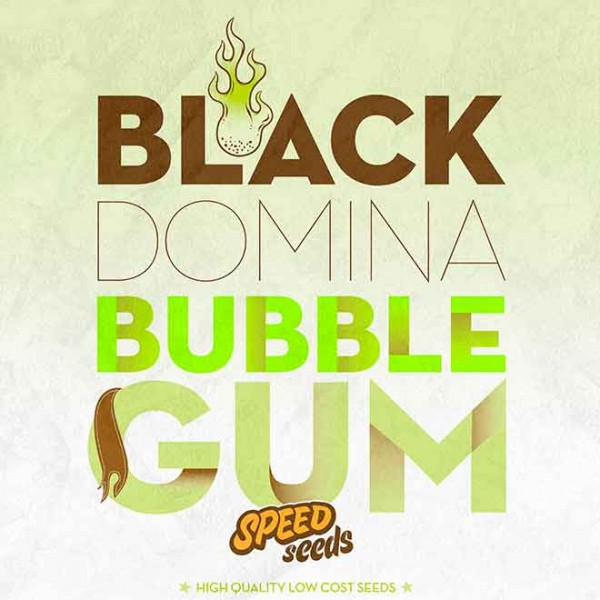 BLACK DOMINA X BUBBLE GUM - Speed Seeds